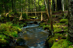 Rustic Wooden Bridge over Stream in Woods Royalty Free Stock Image