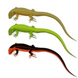 Set of colored lizard icons isolated on white background.Vector Royalty Free Stock Photo