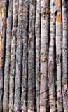 Pole Fence With Bark Royalty Free Stock Images