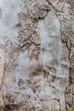 Rustic wooden texture - background - nature Royalty Free Stock Image