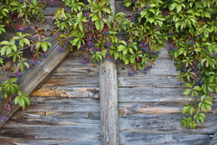 Rustic wooden wall Stock Images