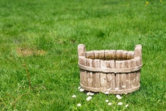 Rustic wooden water bucket on green grass field and wild Paralute Bellis perennis Royalty Free Stock Photos