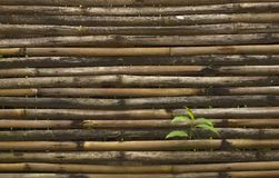 Rustic yellow bamboo fence and green plant. Dark background waved Royalty Free Stock Image