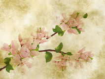 Rustical flowers Royalty Free Stock Photos