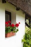 Rustical okno na biel ścianie z bodziszkiem obrazy stock