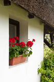 Rustical window on white wall with geranium. And reed roof Stock Images
