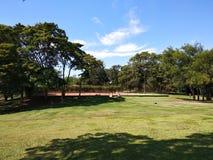 Rustiek chalet in een bospark met mooie bomen stock foto