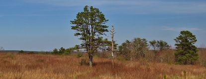 Rustiek landschap Royalty-vrije Stock Foto