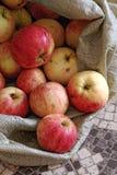 Rustieke appelen in een ruwe stoffenzak Natuurlijke landelijke producten Ecologische vruchten zonder pesticiden en GMOs Royalty-vrije Stock Afbeeldingen