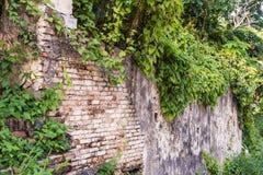 Rustieke bakstenen muur met Klimop Royalty-vrije Stock Afbeeldingen