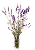 Rustieke geïsoleerdez bos van lavendel in jampot, Stock Afbeelding