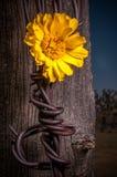Rustieke Omheining Post With Wildflowers Stock Foto's