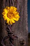 Rustieke Omheining Post With Wildflowers Stock Fotografie