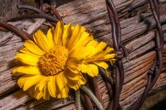 Rustieke Omheining Post With Wildflowers Stock Afbeelding