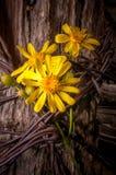 Rustieke Omheining Post With Wildflowers Stock Foto