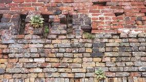 Rustieke rode bakstenen muur met installaties Stock Foto's