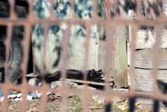 Rustieke zwarte kat die in de zon in de dorpswerf zonnebaden Royalty-vrije Stock Afbeeldingen