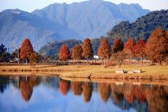 Rustig landschap van de herfstbomen in Taiwan in vroege ochtend stock afbeeldingen