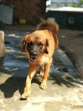Rustig puppy Royalty-vrije Stock Foto