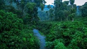 Rustig regenwoud tijdens moessonseizoen stock foto's