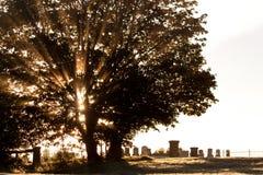 Rustige begraafplaats bij zonsopgang Royalty-vrije Stock Foto's