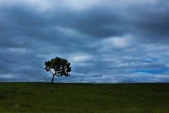 Rustige eenzaamheid: Boom tegen een tegenover elkaar gestelde hemel stock foto's