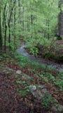 Rustige mening van stroom bij Keown-Dalingen Royalty-vrije Stock Fotografie