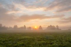 Rustige mistige weide bij zonsopgang Stock Foto's