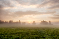 Rustige mistige weide bij zonsopgang Royalty-vrije Stock Fotografie