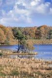 Rustige moerassen met een vogelkolonie en bomen in de herfstkleuren, Turnhout, België Stock Foto's