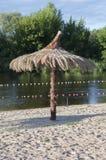 Rustige palm Royalty-vrije Stock Fotografie