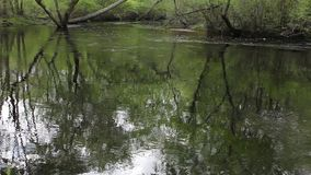 Rustige rivier in de lente stock videobeelden