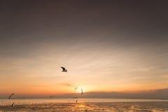 Rustige scène met zeemeeuw die bij zonsondergang vliegen Royalty-vrije Stock Afbeelding