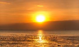 Rustige scène met zeemeeuw die onder zonsondergang vliegen Royalty-vrije Stock Afbeelding