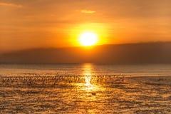 Rustige scène met zeemeeuw die op zonsondergang vliegen Royalty-vrije Stock Afbeeldingen