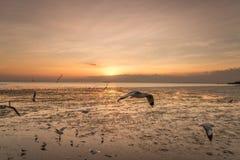 Rustige scène met zeemeeuw die op zonsondergang vliegen Stock Fotografie