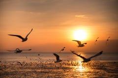Rustige scène met zeemeeuw die op zonsondergang vliegen Stock Afbeelding