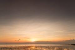 Rustige scène met zeemeeuw die op zonsondergang vliegen Royalty-vrije Stock Foto's