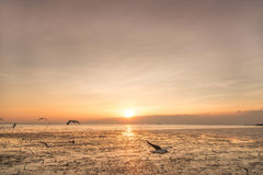 Rustige scène met zeemeeuw die op zonsondergang vliegen Royalty-vrije Stock Fotografie