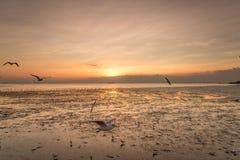 Rustige scène met zeemeeuw die op zonsondergang vliegen Stock Foto