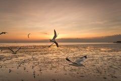 Rustige scène met zeemeeuw die op zonsondergang vliegen Royalty-vrije Stock Foto