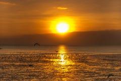 Rustige scène met zeemeeuw die op zonsondergang vliegen Royalty-vrije Stock Afbeelding