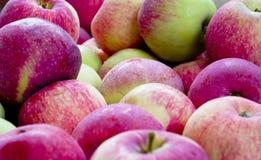 Rustikale Äpfel lizenzfreie stockfotografie