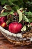 Rustikale Äpfel der kürzlich geernteten Ernte Stockbilder