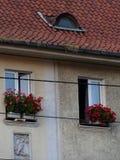 Rustikale Dachplatten mit Flechten und Moos stockbild