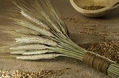 Rustikale Einstellung mit Weizengarbe und -körnern Stockfotografie