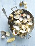 Rustikale italienische vongole Muscheln in der Weißweinsoße Stockfoto