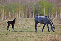 Rustikale Malerei, Pferde in der Wiese Stockbild