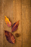 Rustikale Nahaufnahme der Fall-Blätter und der Startwert- für Zufallsgeneratorhülse auf Holz Lizenzfreies Stockbild