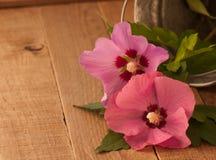 Rustikale noch Lebensdauer und Rose der Sharon-Blumen Lizenzfreies Stockfoto